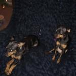 Deken voor de hondjes