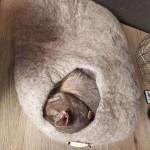 gebruikte catcave